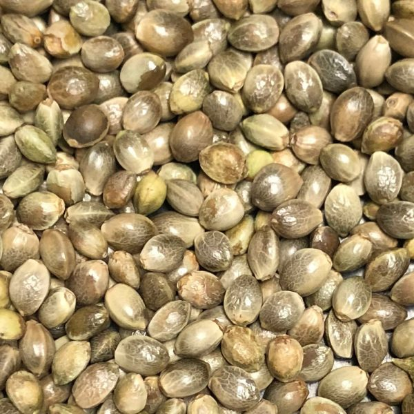 Hillbilly Hash Hemp Seeds Closeup