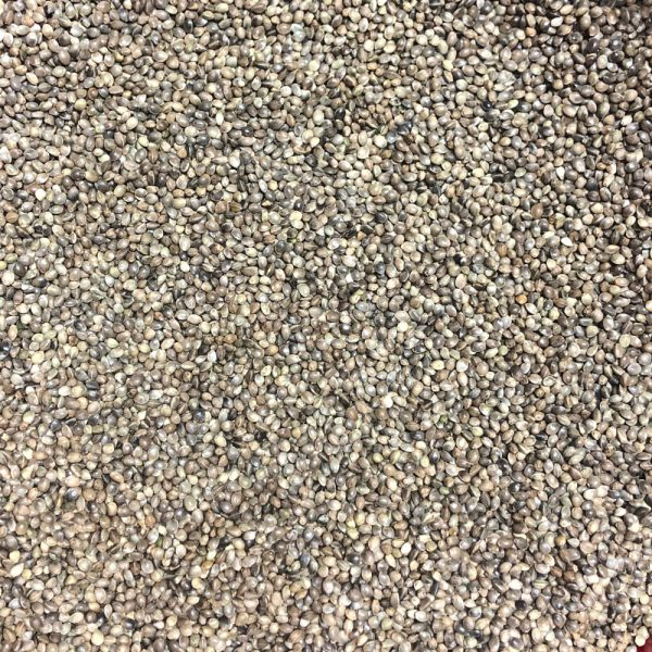 RN-13 Non-Feminized Hemp Seeds
